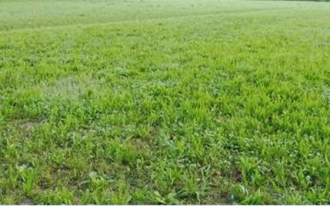 Terreno agricolo di 2410 mq vendesi a Magnano in Riviera e precisamente in zona artigianale tra Tarcento e Magnano, facilmente praticabile e con possibilità di irrigazione.